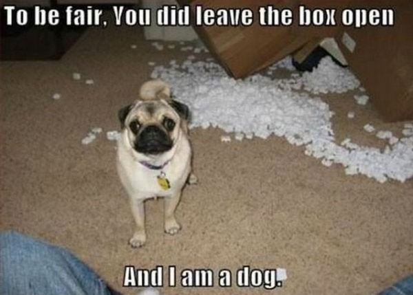 To Be Fair - Dog humor