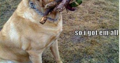 I Wasn't Sure... - Dog humor