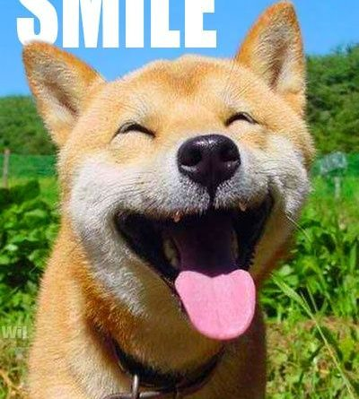 Smile It's Friday - Dog humor