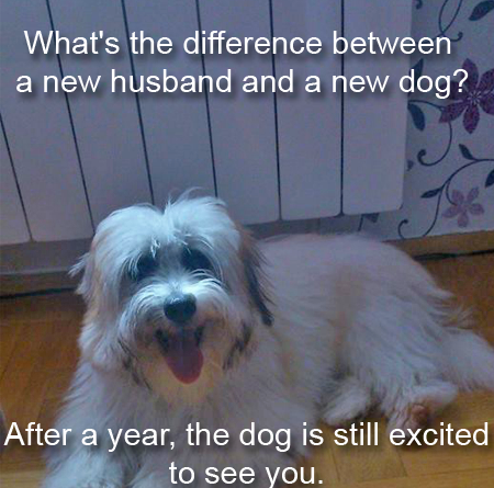 What's The Difference Between a New Husband And a New Dog? - Dog humor