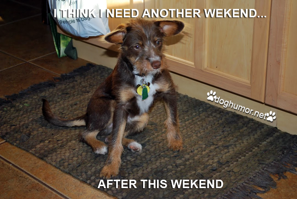I Think I Need Another Weekend... - Dog humor
