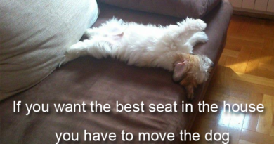 If You Want The Best Seat In The House - Dog humor