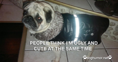 What People Think About Pugs - Dog humor