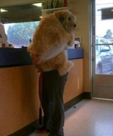 Trip To The Vet - Dog humor