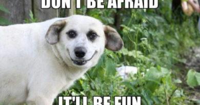 Don't Be Afraid - Dog Humor