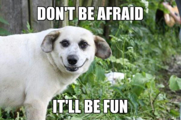 Don't Be Afraid - Dog Humor