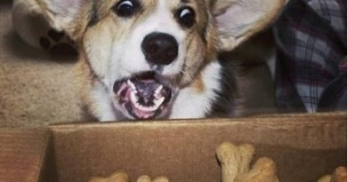 Jackpot! - Dog humor