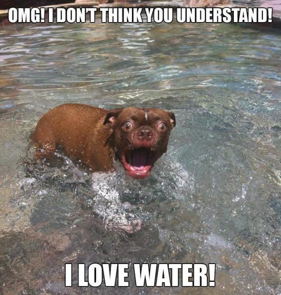 I Love Water - Dog humor