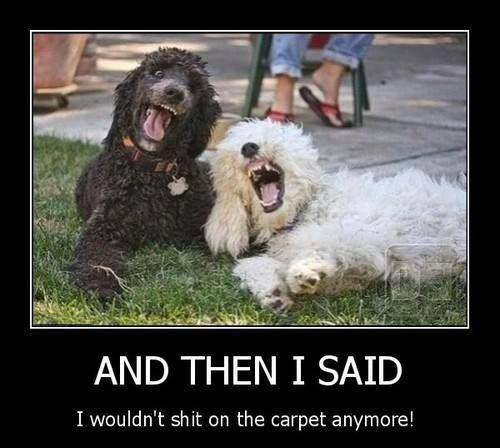 And Then I Said - Dog humor