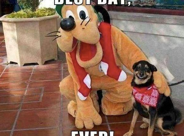 Best Day Ever - Dog humor