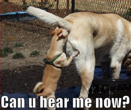 Can You Hear Me Now? - Dog humor