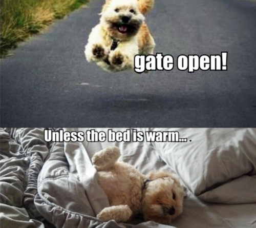 Choices Dog humor