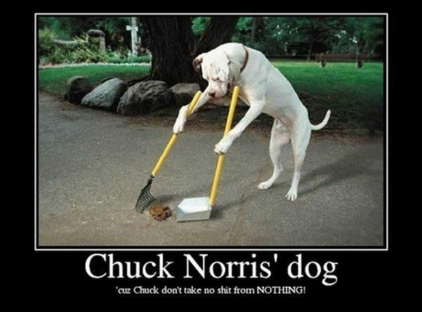 Chuck Norris' Dog - Dog humor