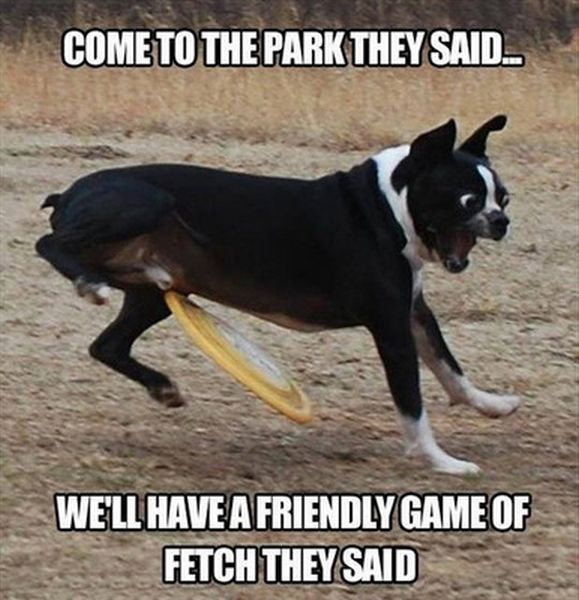 Come To The Park They Said... - Dog humor
