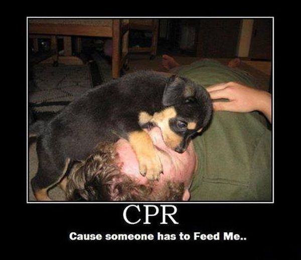 CPR - Dog humor