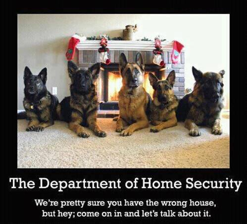 The Department Of Home Security - Dog humor