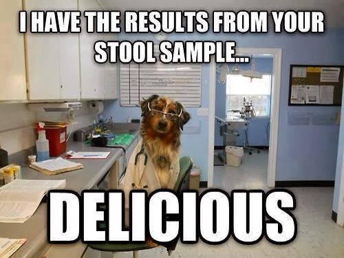 Doctor Dog - Dog humor