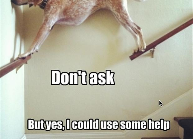 Don't Ask - Dog humor
