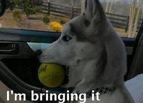 Extra Ball - Dog humor