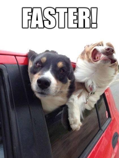 Faster - Dog humor