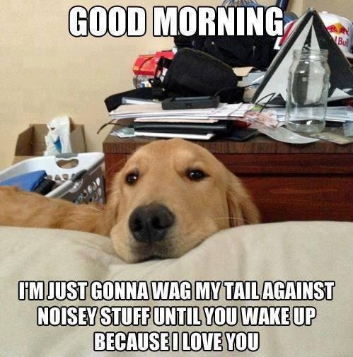 Good Morning - Dog humor