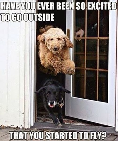 Have You Ever Been So Excited To Go Outside - Dog humor