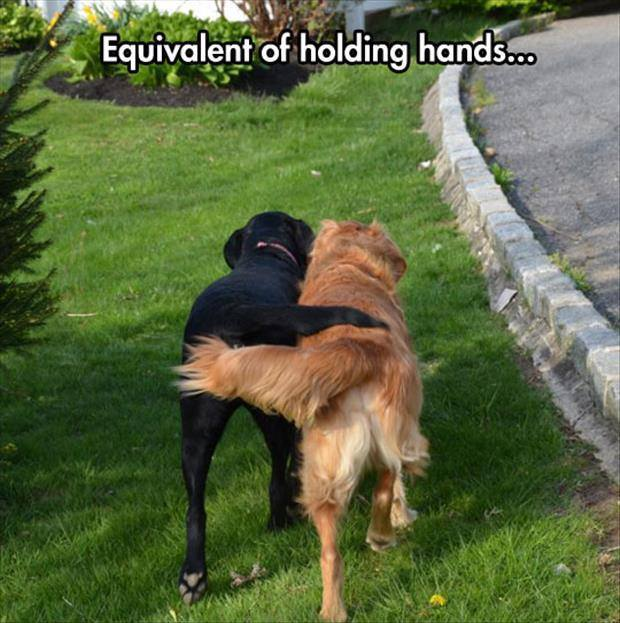 Holding Tails - Dog humor