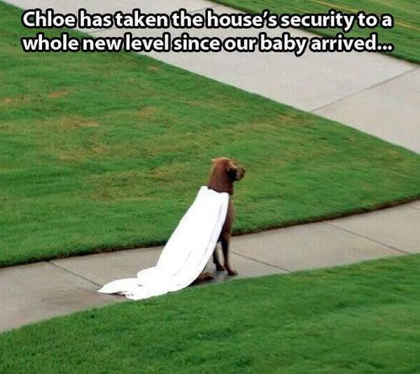 Home Security - Dog humor