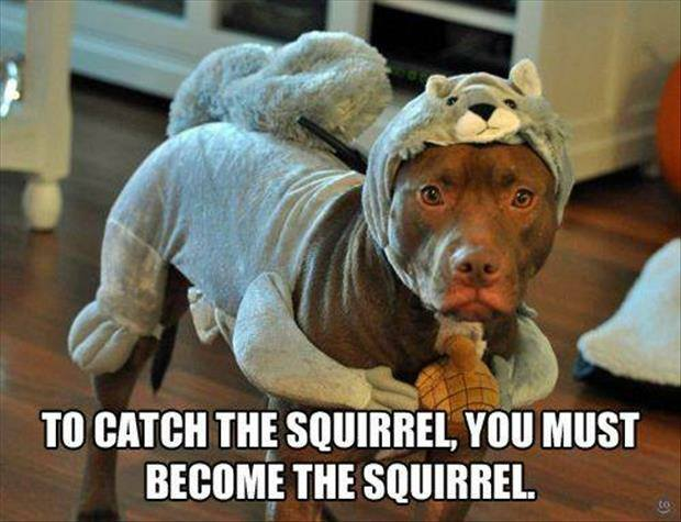 How To Catch The Squirrel - Dog humor