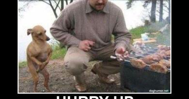 Hurry Up - Dog humor