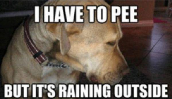 Tough Decision - Dog humor