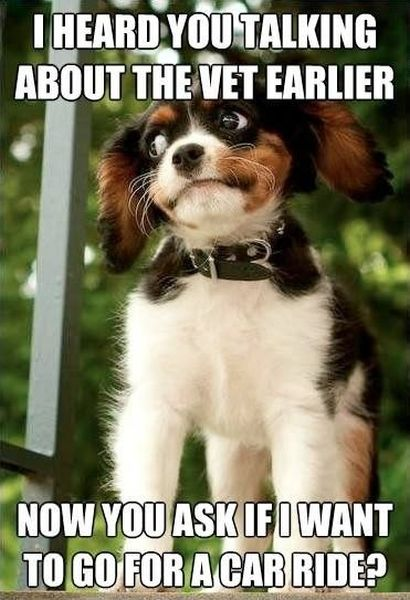 I Heard You Talking - Dog humor