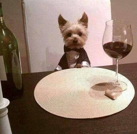 I Made Dinner For You - Dog humor