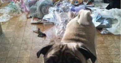 Little Helper - Dog humor