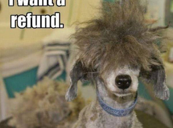 I Want A Refund - Dog humor