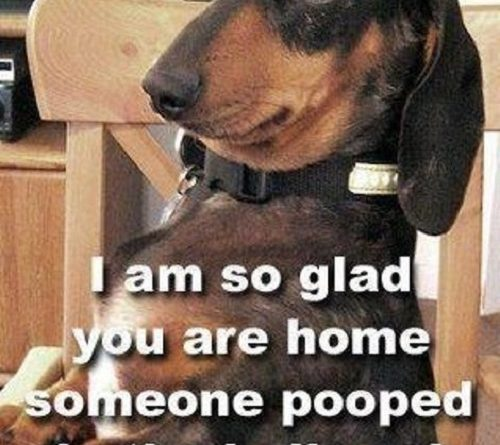 I'm So Glad You Are Home - Dog humor