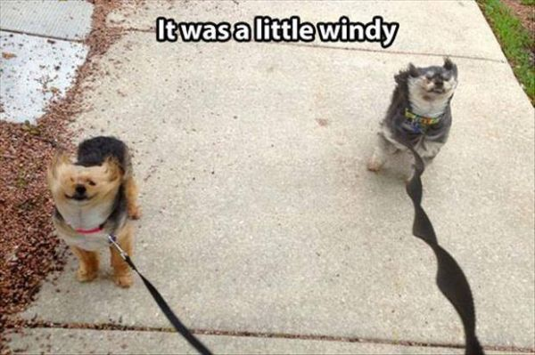 It Was A Little Windy - Dog humor