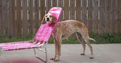 It's Called Fashion - Dog humor