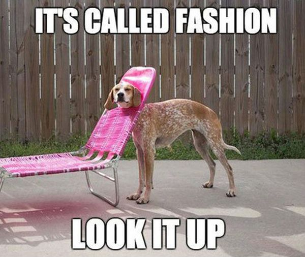 It's Called Fashion - Dog humor