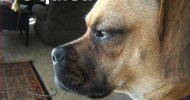 It's Quiet - Dog humor