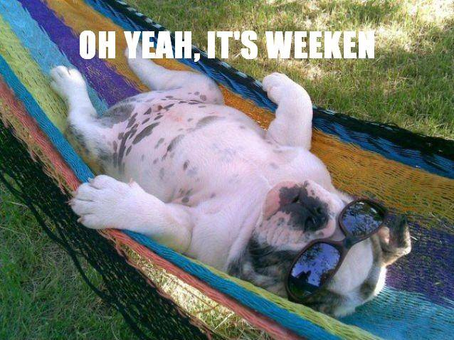 It's Weekend - Dog humor