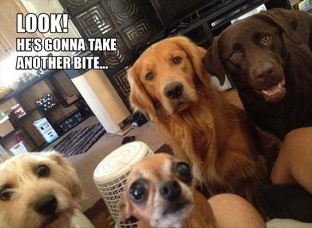 Look! - Dog humor