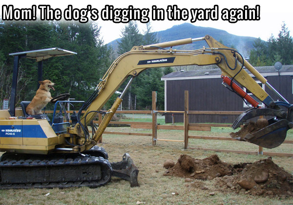 Mom! Dog's Digging In The Yard Again
