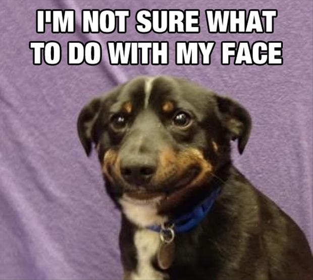 I'm Not Sure - Dog humor