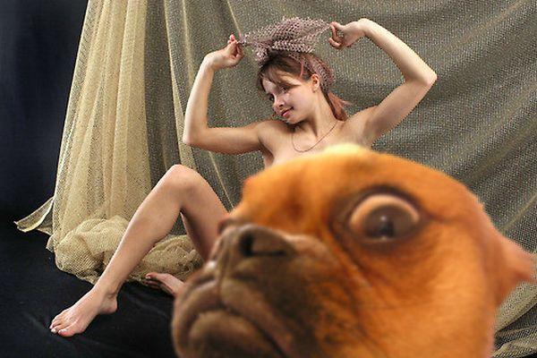 Photobomb Level: Dog - Dog humor