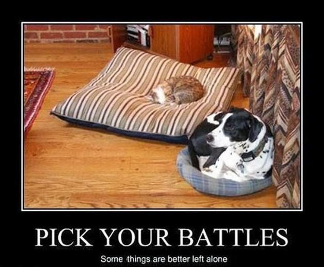 Pick Your Battles - Dog humor