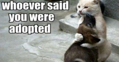 Protective Cat - Dog humor