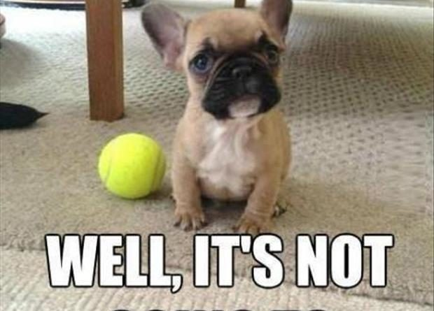 He Just Wants To Play - Dog humor