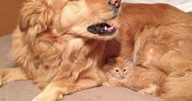 Sweet - Dog humor