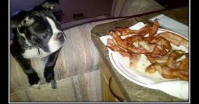 Temptation - Dog humor